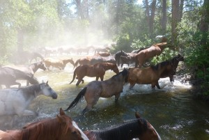 riding a horse in Wyoming